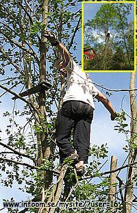 Trädfällning, vad brukar det kosta? Lämpliga trädfällare?