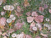 svampskogen