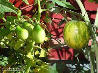 Tomater blandat