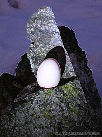 Färska ägg
